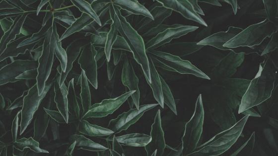 Motif Natural Wallpaper Dinding Keren