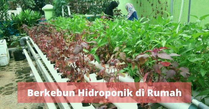 5 Teknik Mudah Berkebun Hidroponik Untuk Hunian Asri di Bali